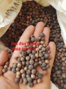Hạt giống cây đàn hương
