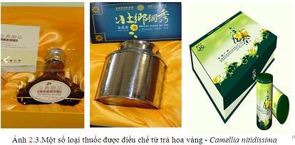 Thuốc từ cây trà hoa vàng