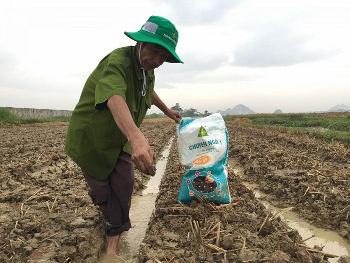 Bón lót bằng cách rải đều phân bón trên khu vực đất chuẩn bị gieo giống