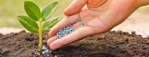 Bón thúc là công việc bổ sung phân bón cho cây trong quá trình cậy phát triển và sinh trưởng