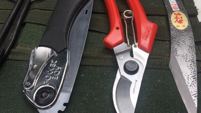 Chuẩn bị dụng cụ cắt tỉa cành cho cây