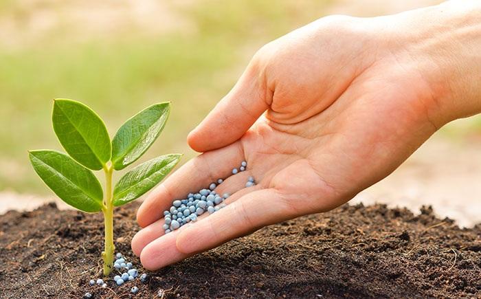 Phân bón hóa học ngày càng được sử dụng nhiều trong trồng trọt