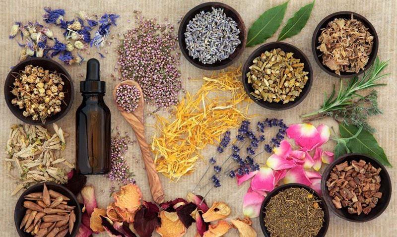 top 10 loại dược liệu quý của Việt Nam