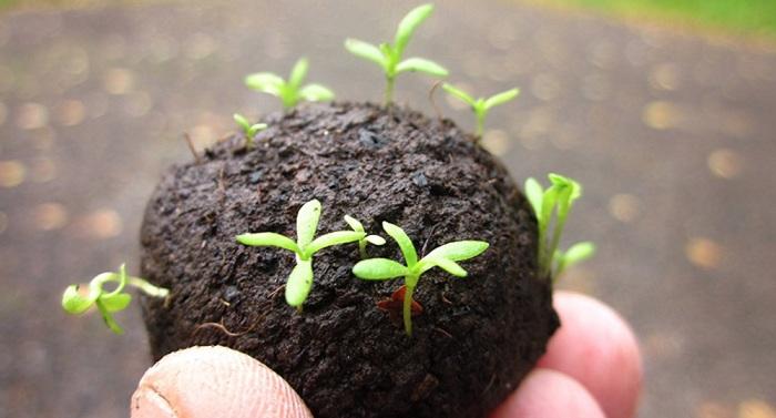 Ươm hạt giống trong viên nén xơ dừa