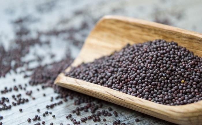cách ươm hạt giống hiệu quả