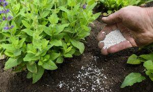 phân bón làm tăng độ chua của đất