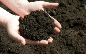 Phân bón hữu cơ là một dạng phân bón có nguồn gốc đa dạng