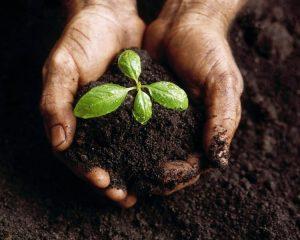 Khi sử dụng phân vi sinh bón cho cây trồng sẽ không gây ảnh hưởng xấu đến con người, động thực vật và môi trường sinh thái
