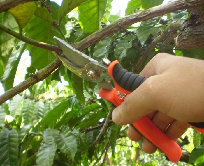 Xác định cành cây cần cắt bỏ
