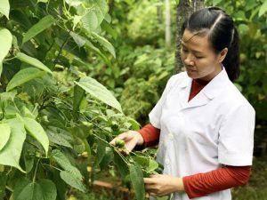 Địa chỉ cung cấp giống cây trồng tại Vĩnh Phúc