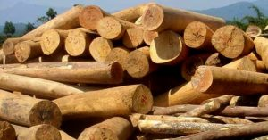 Cây lâm nghiệp lấy gỗ nhanh