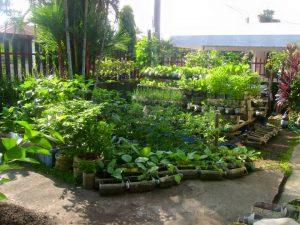 Cửa hàng kinh doanh cây giống