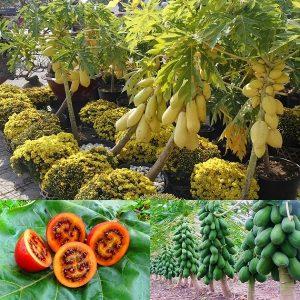 Giống cây trồng có giá trị kinh tế cao